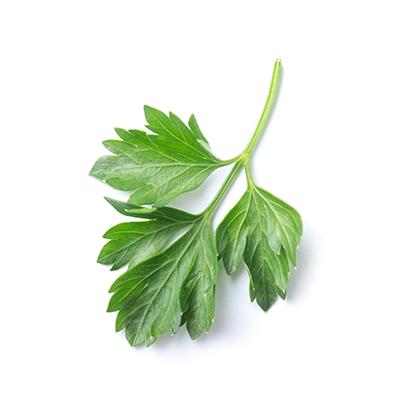 Leaf Parsley